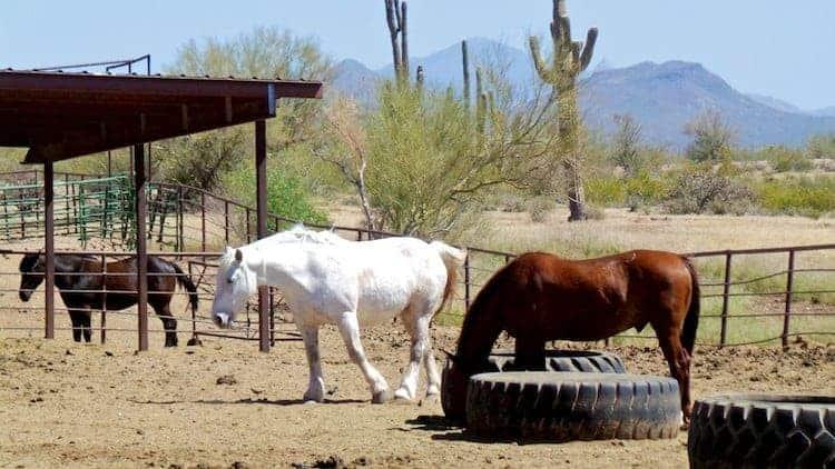 horseback riding in arizona 13
