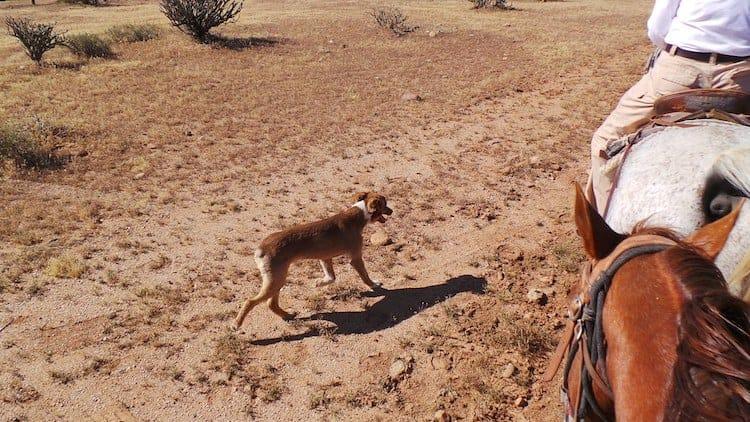 horseback riding in arizona 4