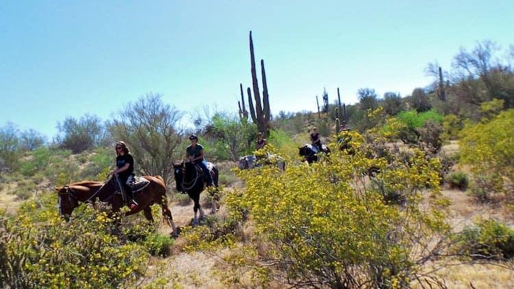 horseback riding in arizona 8