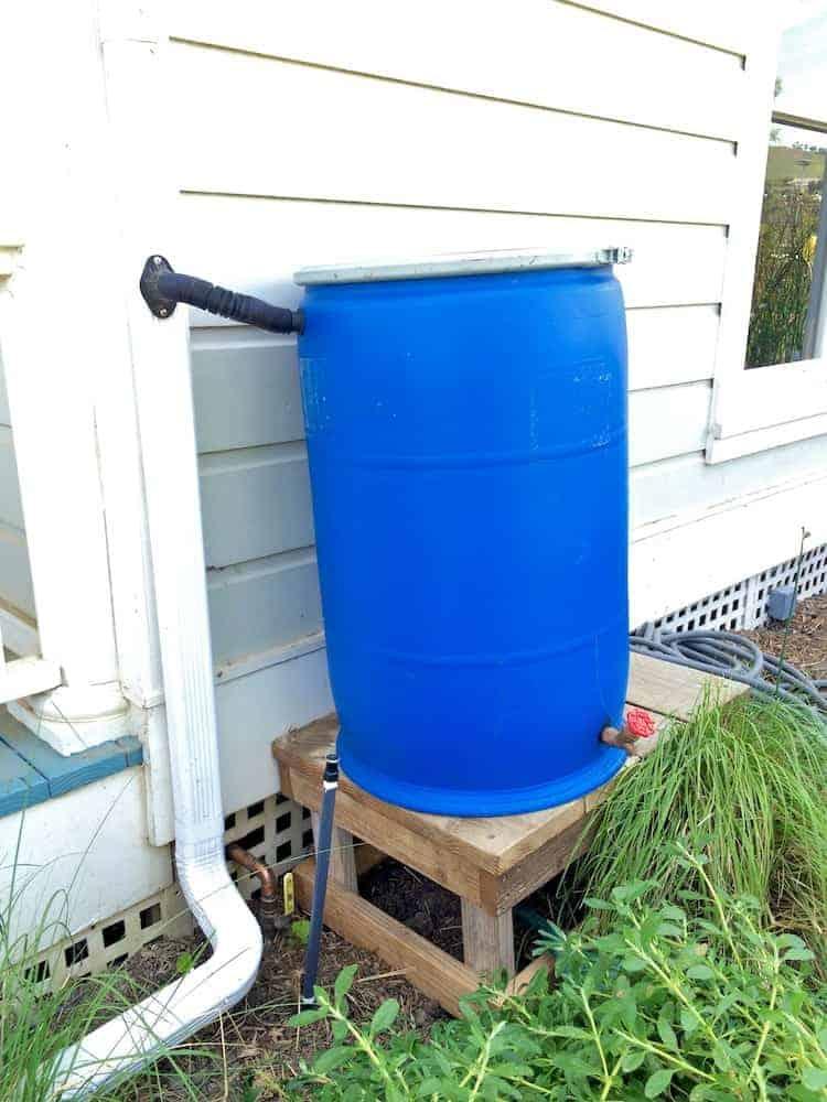 rain barrel (1)