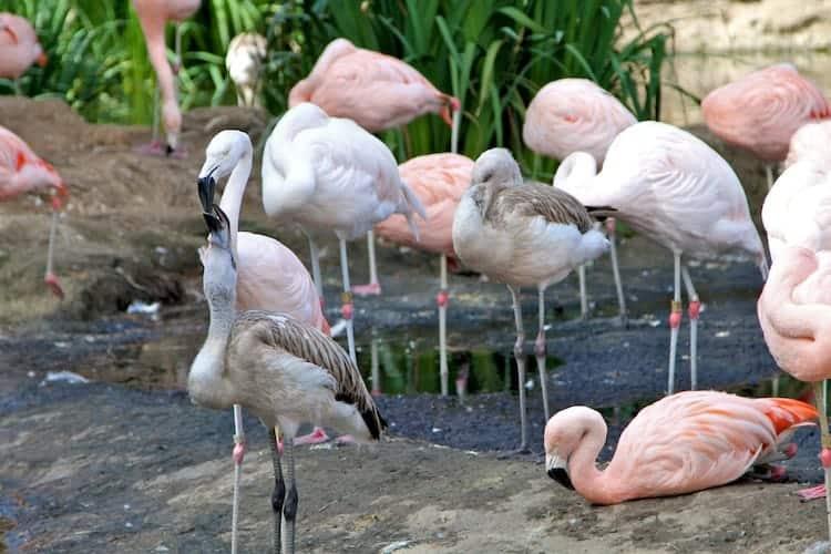 san diego zoo safari park 1