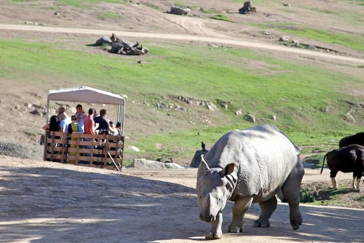 san diego zoo safari park 21