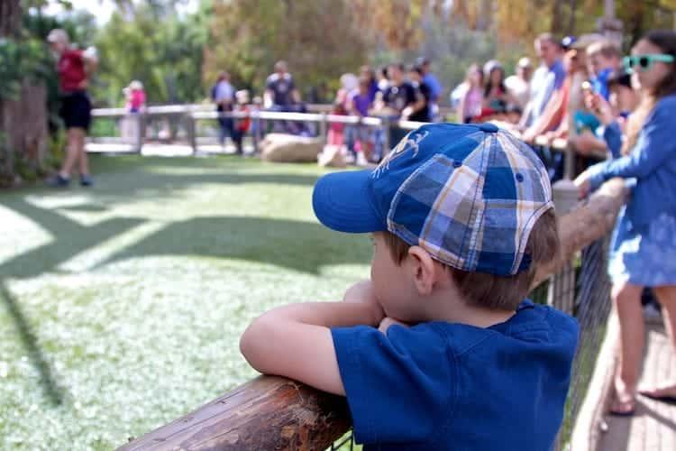 san diego zoo safari park 3
