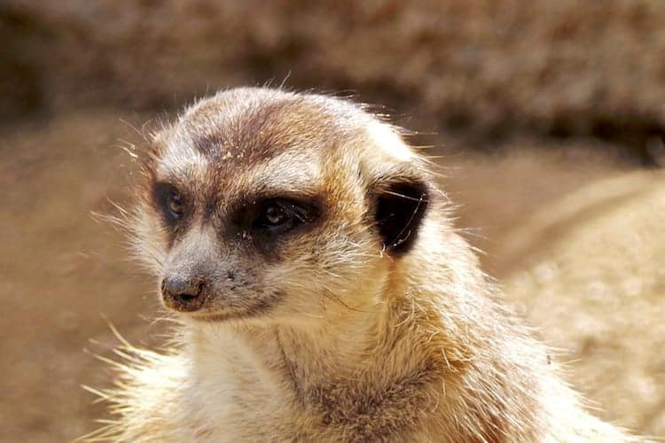 san diego zoo safari park 5