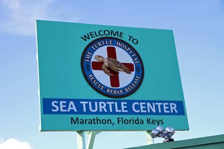 the turtle hospital 1