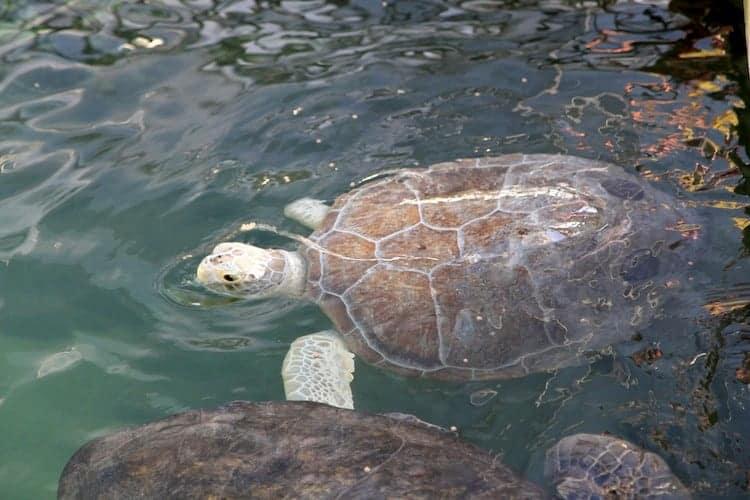 the turtle hospital 12