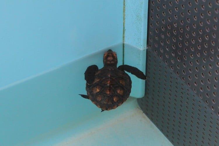 the turtle hospital 8