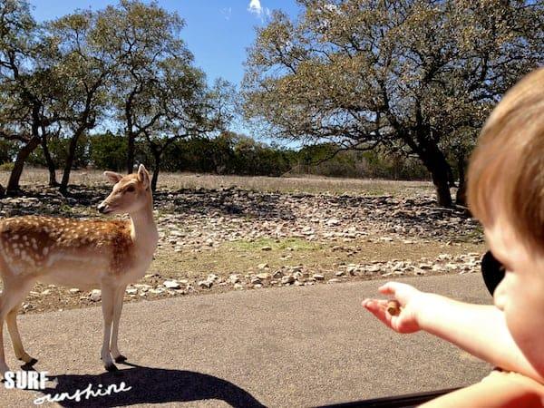 Natural Bridge Wildlife Ranch 3