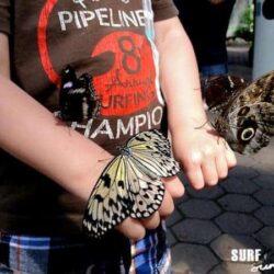Texas Butterflies at the San Antonio Zoo Butterfly Exhibit