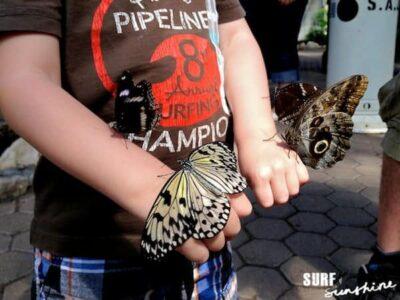 san antonio zoo butterfly exhibit