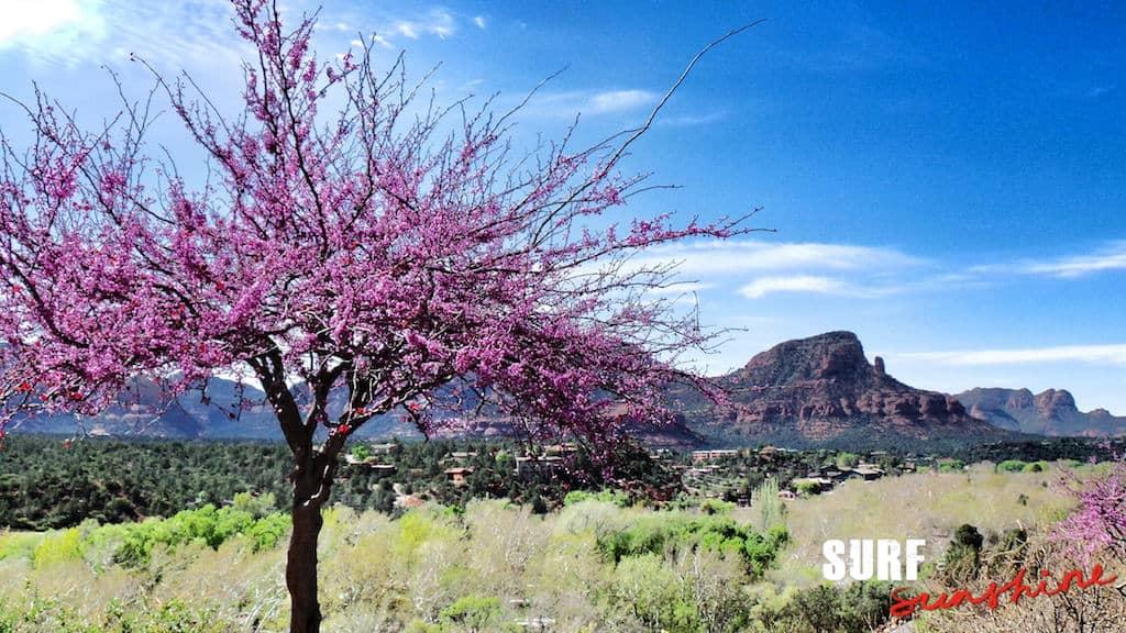 Grand Canyon Viator Tour 9