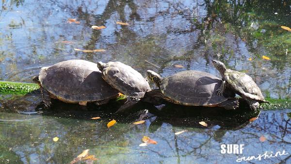 San Antonio Zoo 10