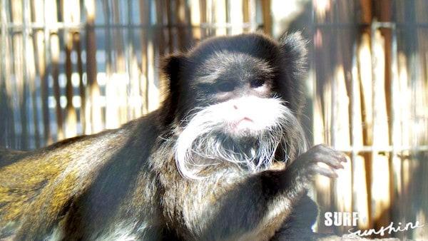 San Antonio Zoo 11