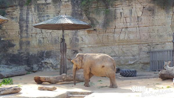 San Antonio Zoo 13