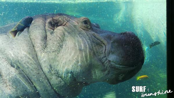 San Antonio Zoo 6