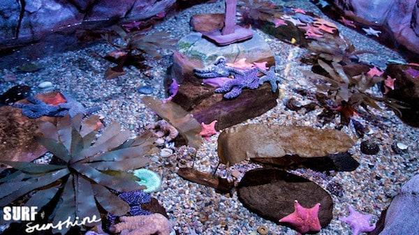 Sea Life Aquarium 1