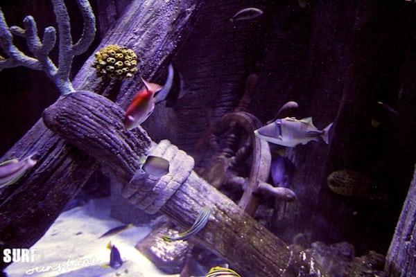 Sea Life Aquarium 10