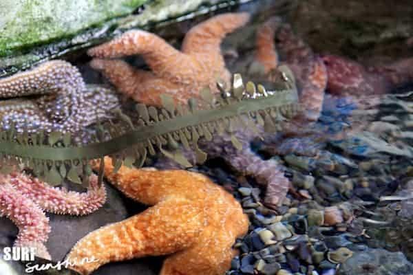 Sea Life Aquarium 5