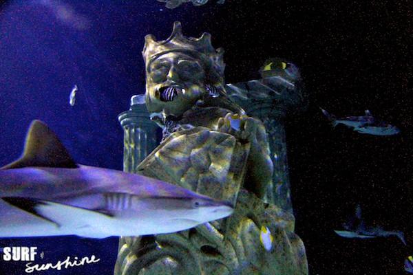 Sea Life Aquarium 9
