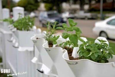 container gardening 1