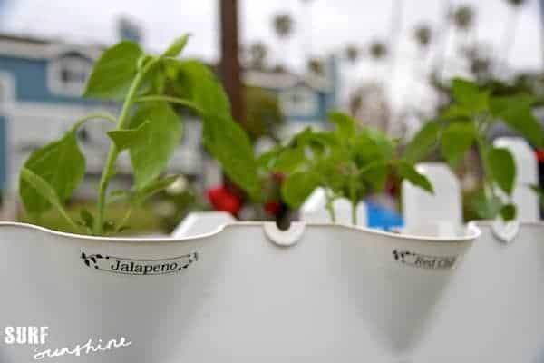 container gardening 5