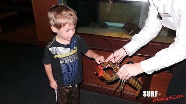 red lobster cheddar bay biscuit recipe endless shrimp