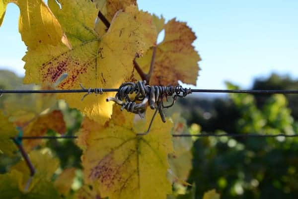 holman ranch carmel valley vineyard