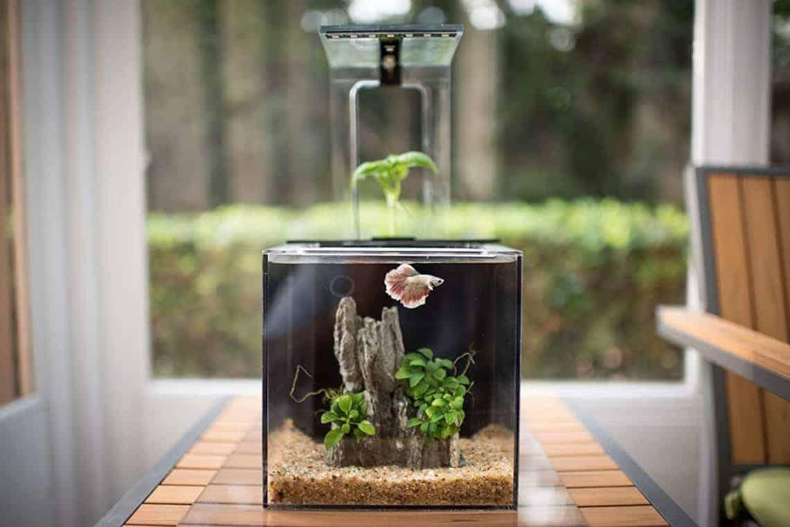 Desktop DIY Aquaponic Gardening