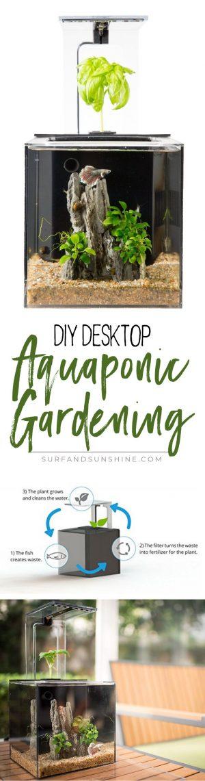 ecocube Desktop DIY Aquaponic Gardening