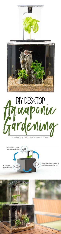 The EcoQube: Desktop DIY Aquaponic Gardening with Fish