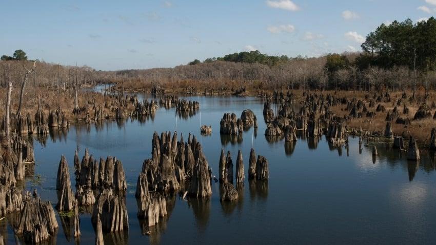 dead lakes gulf county florida