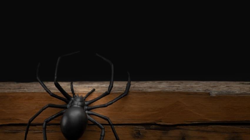 halloween pranks fake spider