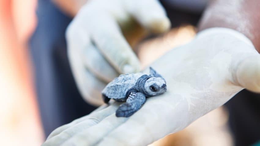 turtle rescue gulf county florida