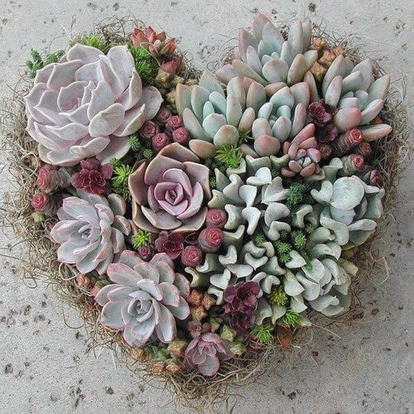 Indoor Succulent Projects