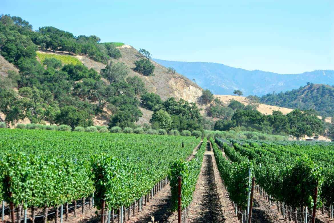 Santa Barbara wineries and vineyards 3 - 4 Northern California Hidden Gems for Your Bucket List
