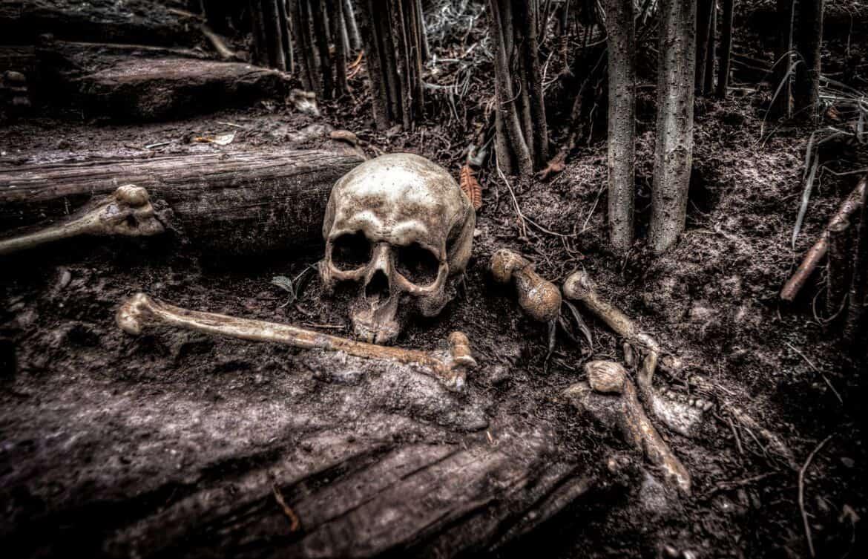 skull and bones in the woods