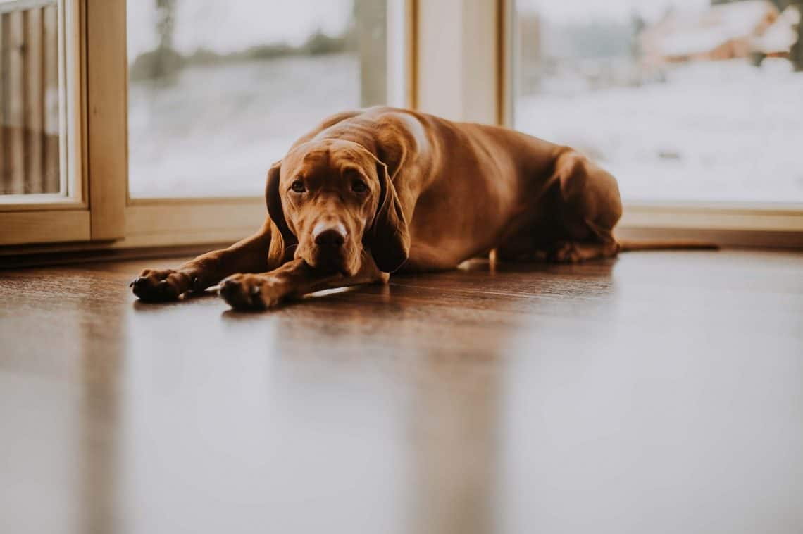 should you get pet insurance