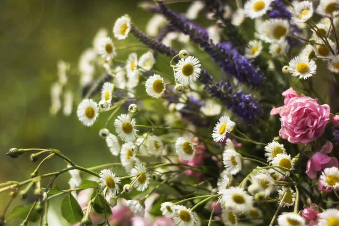 flowers 2517154 1920