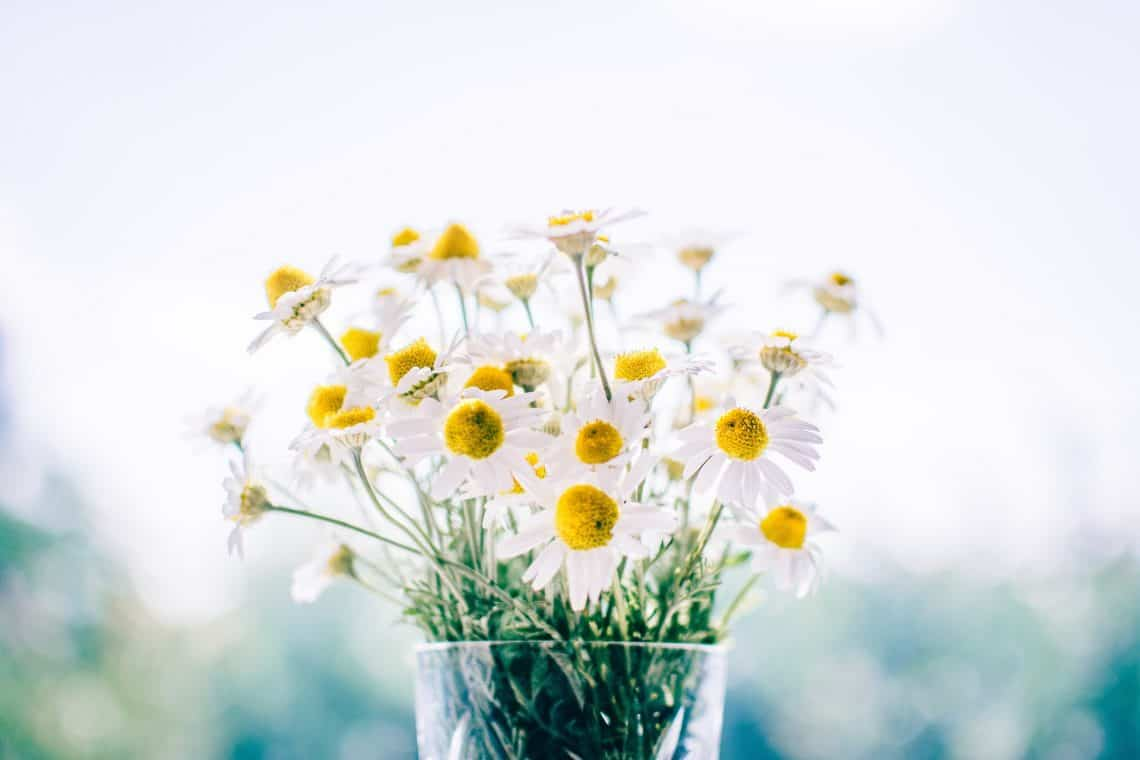 flowers 983897 1920