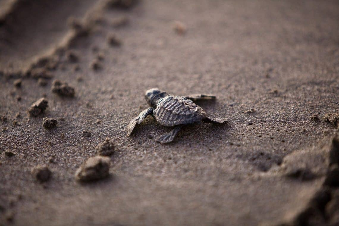 sea turtle 356125 1280 1140x760 - Sea Turtle Conservation and What You Can Do to Help