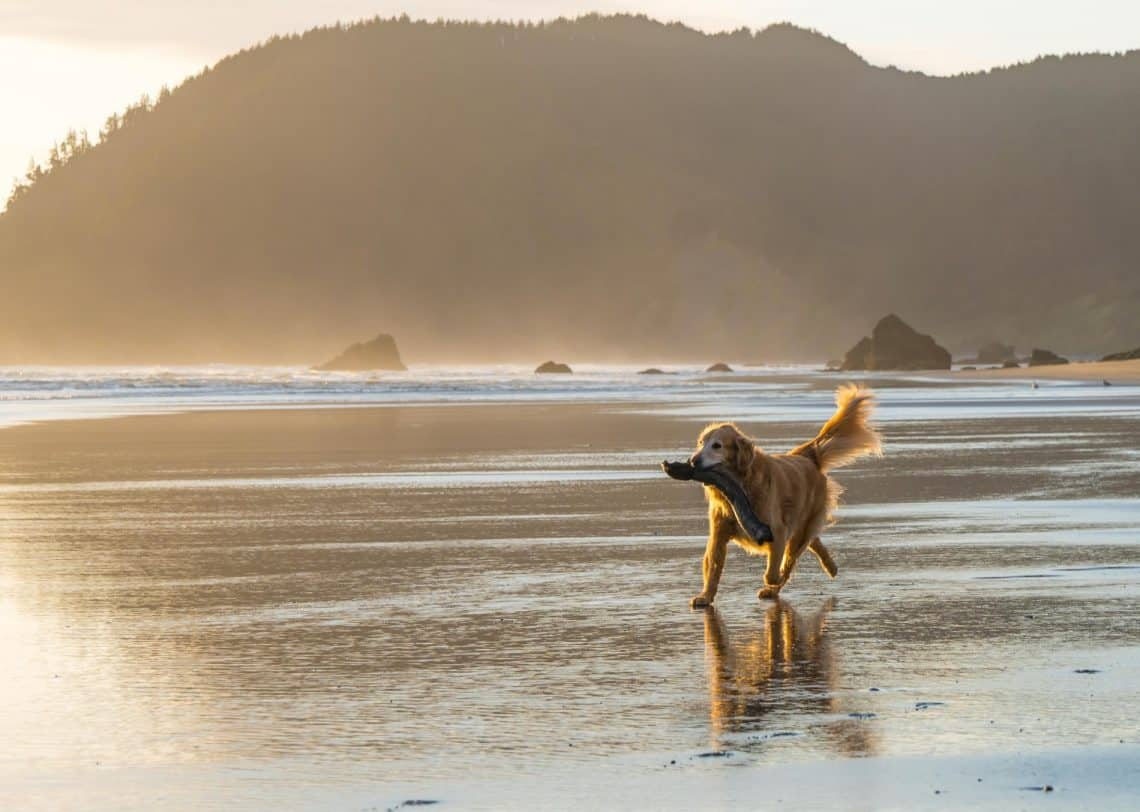 dog at the beach 1140x812 - 10 Things You Can Strike Off Your Bucket List by Visiting Mendocino, California