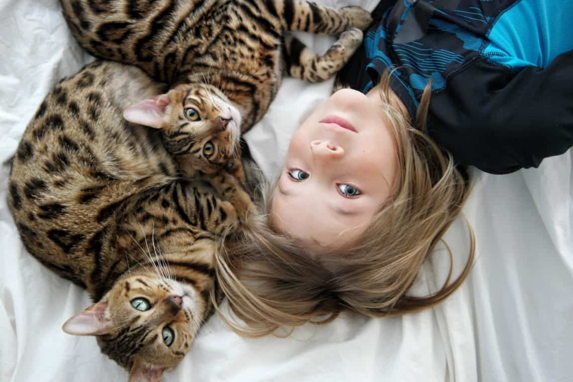 IMG 8953 1140x760 - When Your Cats are Like Family, You Want the Best for Them