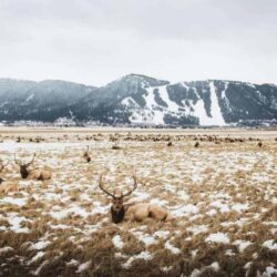 22 Ways to Rock Winter in Jackson Hole on a Budget