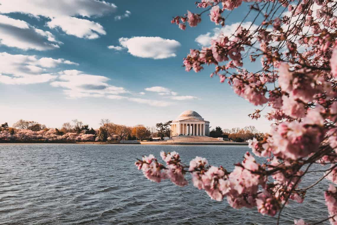 washington dc cherry blossoms 1140x760 - What Would You Do with 4 Bus Tickets and $500?