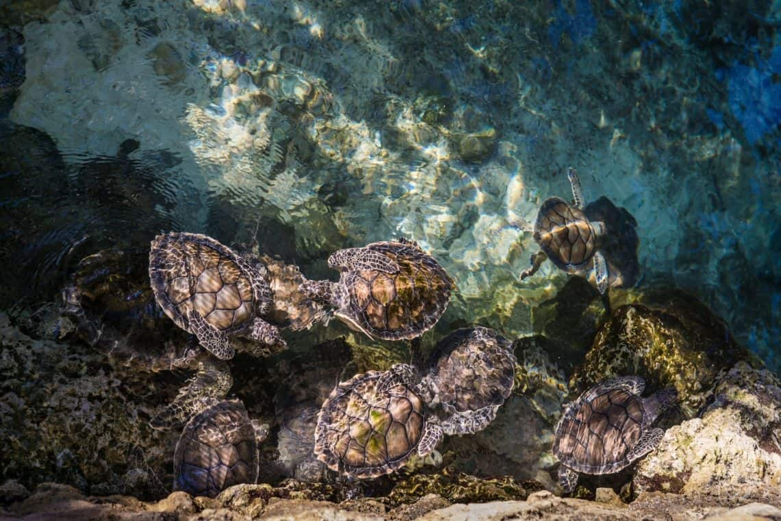 loggerhead turtles Zakynthos greece