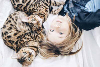 bengal cat how do indoor cats get fleas