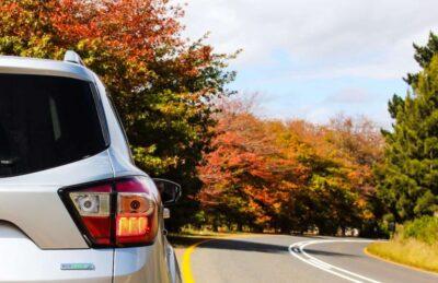 car road fall trees