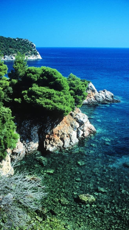 skopelos greece pine forests