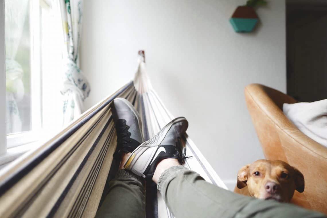 house hammock dog