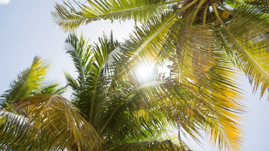 palm trees florida summer